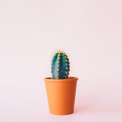 decoración cactus
