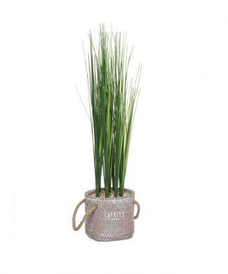 PLANTA GRASS MACETA - CAPRITX HOME